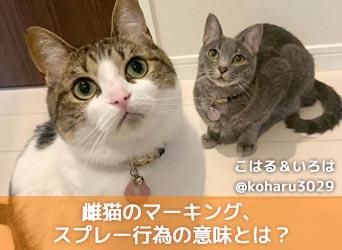 猫 マーキング 防止