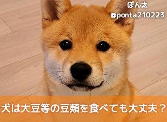 いい 犬 大豆 食べ て