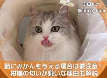 猫 が 嫌い な 匂い 猫が嫌いな匂いとは?柑橘系やアロマは要注意!しつけなど活用法も