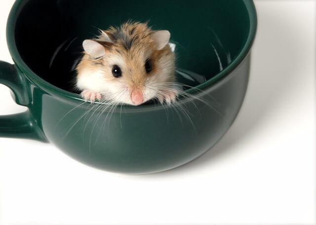 犬猫以外にどんな動物がペット保険に入れるか イメージ画像