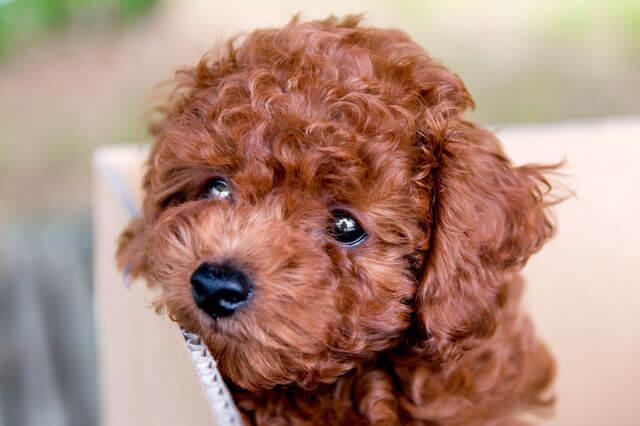 まとめ:犬のメラノーマについて