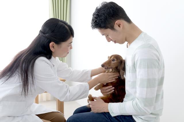 ペット保険とは? イメージ画像