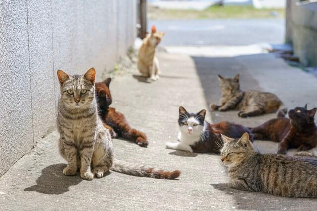 保護 したら 野良猫 野良猫を捕獲するにはどうしたらいい?捕まえ方を解説!【保護猫】