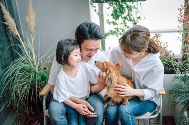 ペット保険の比較方法 イメージ画像